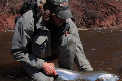 Create Listing: Guided Fly Fishing- Steelhead Trips -  Lake Superior
