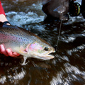 Create Listing: Walk and Wade Trips (Price includes 2 Anglers) - Brule river