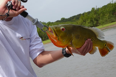 Create Listing: PEACOCK BASS FISHING in LETICIA AMAZON,  COLOMBIA