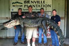 Create Listing: Trophy Alligator Hunts - Bienville Plantation