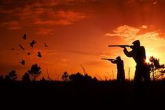 Create Listing: Guided Quail Hunts - Bienville Plantation -  Half Day
