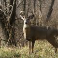 Create Listing: Deer Hunts and Leases - Bienville Plantation