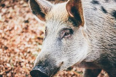 Create Listing: Hog Hunting and Leases - Bienville Plantation