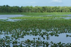 Create Listing: Airboat Tour