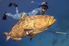 Create Listing: Guided Spearfishing Charters - Half Day (Up to 4 divers)