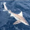 Create Listing: St. Augustine Shark Fishing