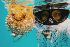 Create Listing: Diving & Snorkeling - Tours & Guides|Equipment/Gear