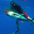 Create Listing: Spearfishing - Equipment/Gear