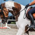 Create Listing: Horseback Riding - Experiences|Classes & Lessons