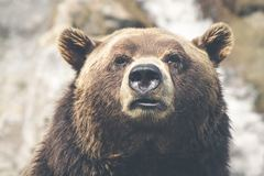 Create Listing: Bear Hunting - Experiences