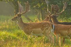 Create Listing: Deer Hunting - Experiences