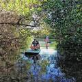 Create Listing: Manatee Pocket Mangrove Exploration Paddle Tour