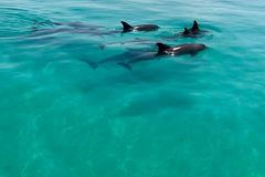 Create Listing: Dolphin Watching
