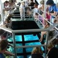 Create Listing: Glass-Bottom Boat Cruises in Key Largo