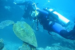 Create Listing: Discover Scuba - 1-Day Resort Course