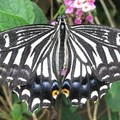 Create Listing: The Maui Butterfly Farm Tour