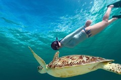Create Listing: 2 Hour Turtle Snorkeling & Ocean Sports