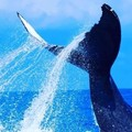 Create Listing: Up-Close Whale Watching from Maui