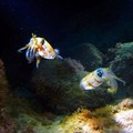 Create Listing: Night Dive - Marine Preserve North Shore