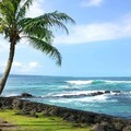 Create Listing: Beach Snorkel - Sea Turtle Lagoon and Black Sand Beach