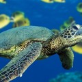 Create Listing: SCUBA Shore Dive at Sea Turtle Cove