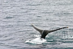 Create Listing: Whale Watching