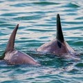 Create Listing: Dolphin and Wildlife Adventure