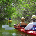 Create Listing: 2 Hour Kayak Eco Tour - All Levels! Everyone's Favorite Tour