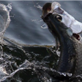 Create Listing: Tarpon and Shark Charter - Up to 6 People