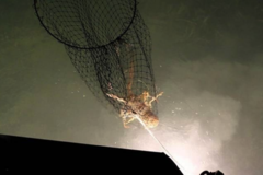 Create Listing: Lobster Bully Netting Charter - Up to 4 People