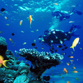 Create Listing: Discover Scuba Diving - Gear Included - 1 Day Course