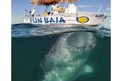 Create Listing: La Paz, Mexico Dive Trip - Deposit for Reservation