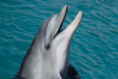 Create Listing: Dolphin Tours - Discover the World of Wild Dolphins