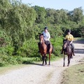 Create Listing: Horseback Riding - 1 and 1.5 hour rides