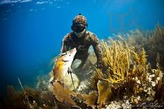 Create Listing: Guided Spearfishing Charters - Full Day (Up to 4 divers)